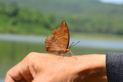 Beautiful butterfly sitting on hand. Stock Photo