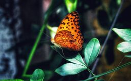 Beautiful Butterfly Sitting on the leaf