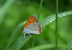 Beautiful butterfly sitting on leaf Royalty Free Stock Photos