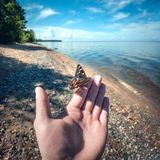 Beautiful butterfly sitting on the man hand close-up POV stock photo