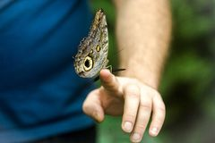 Beautiful butterfly sitting on the man`s hand, close up stock photo