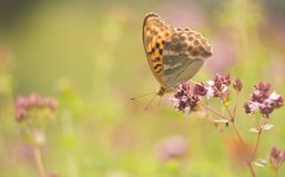 Beautiful butterfly sitting on plant Royalty Free Stock Photo