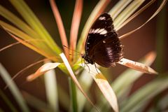 Beautiful butterfly sitting on a plant leaf. A close-up view of a beautiful butterfly sitting on a plant leaf royalty free stock photos