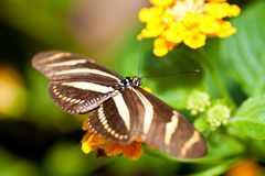 Beautiful butterfly on a small yellow flower Royalty Free Stock Images
