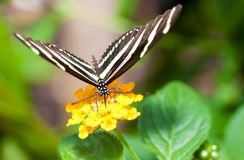 Beautiful butterfly on a small yellow flower Stock Photos