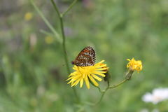 Beautiful butterfly Royalty Free Stock Images