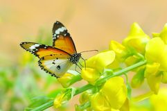 The beautiful mantis in the forestBeautiful butterfly stays on beautiful flowers stock photo