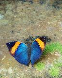 Beautiful butterfly. On the stone covered with moss Stock Photos