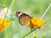 Beautiful butterfly Sucking on sweet and sour flowers and sunshine, blurry background and space for text or symbol with natural be. Auty conception, cute, gentle stock image