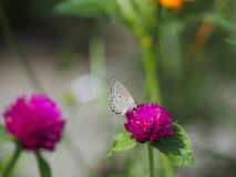 Beautiful butterfly Sucking on sweet and sour flowers and sunshine, blurry background and space for text or symbol with natural be. Auty conception, cute, gentle royalty free stock photos