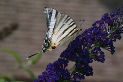 Beautiful butterfly on summer flower in my garden Royalty Free Stock Photography