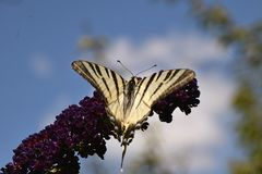Beautiful butterfly on summer flower in my garden Stock Photos
