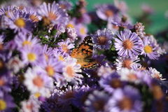 Beautiful butterfly. Among summer flowers Stock Photo