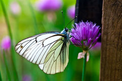 Beautiful butterfly on summer lilac flowers Royalty Free Stock Photos