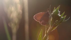 Beautiful butterfly in sunlight whith soft focus background in summer.  stock footage
