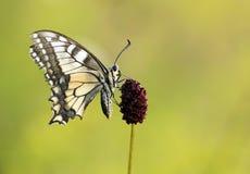 Beautiful butterfly Stock Photos