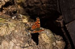 Beautiful butterfly on a tree stump on a sunny day