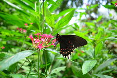 Beautiful butterfly at a tropical jungle in Guatemala Royalty Free Stock Image
