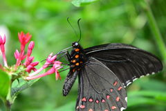 Beautiful butterfly at a tropical jungle in Guatemala Royalty Free Stock Images