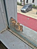 Butterfly outside the windows royalty free stock image