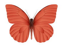 Beautiful butterfly  on a white background Royalty Free Stock Photo