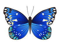 beautiful butterfly. Stock Images