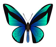 Beautiful butterfly  on a white background Stock Photography
