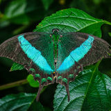 Beautiful butterfly with wings spread. Image of a beautiful butterfly with wings spread royalty free stock photos
