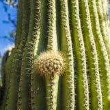 Beautiful cacti in landscape Stock Image