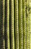 Beautiful cacti in landscape Stock Photos