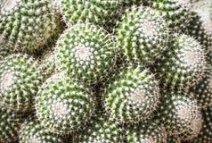 Beautiful cactus background in botanical garden royalty free stock image
