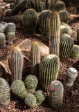 Beautiful cactus collection in botanical garden Royalty Free Stock Photos