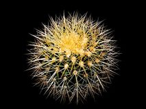 A beautiful cactus in the dark. A cactus is any member of the spine plant family Cactaceae, native to the Americas. They are often used as ornamental plants, but Stock Image