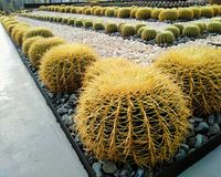 Beautiful cactus in the garden royalty free stock photos