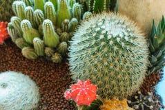 Beautiful cactus image Stock Photos