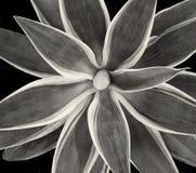 Free Beautiful Cactus On Black Royalty Free Stock Photography - 166219577