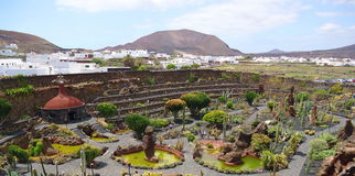 Beautiful cactus park on Lanzarote island Royalty Free Stock Photo