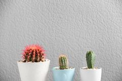 Beautiful cactuses in pots. On color background Royalty Free Stock Photos