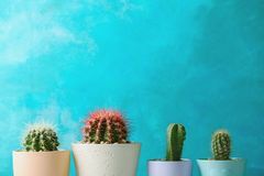 Beautiful cactuses in pots. On color background Stock Photos