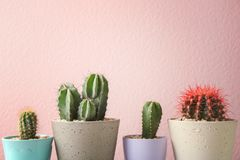 Beautiful cactuses in pots. On color background Royalty Free Stock Photo