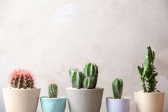 Beautiful cactuses in pots. On light background Stock Images
