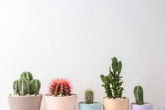 Beautiful cactuses in pots. On light background Stock Image