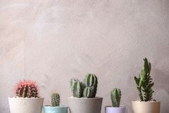 Beautiful cactuses in pots. On light background Royalty Free Stock Image