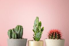 Beautiful cactuses in pots. On color background Stock Photo