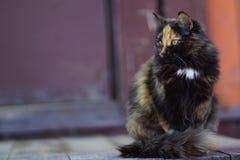 Beautiful calico cat stock photography