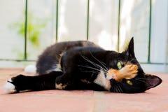 Beautiful calico tortoiseshell tabby cat lying on a balcony stock images