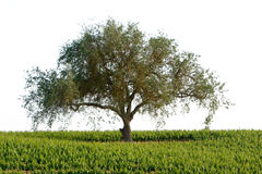 Beautiful California vineyard landscape Stock Image