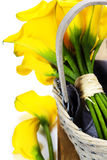 Beautiful calla lilies bouquet Royalty Free Stock Photography