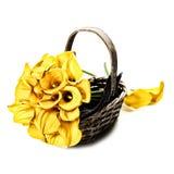 Beautiful calla lilies bouquet Stock Photo