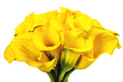 Beautiful Calla Lilly  Bouquet Stock Photography
